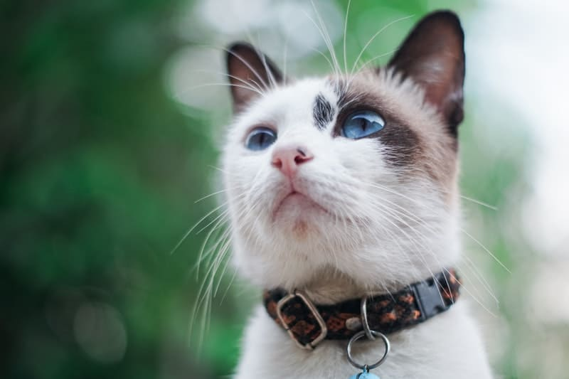 How to Choose the Right Collar for Your Cat