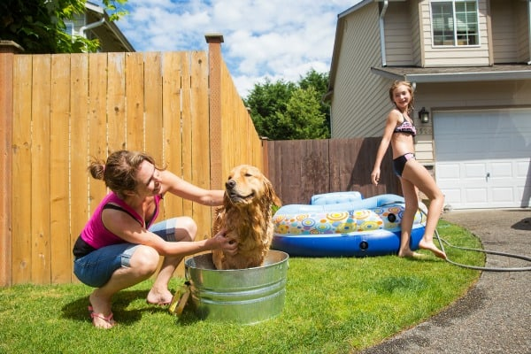 How to keep your dogs cool this summer