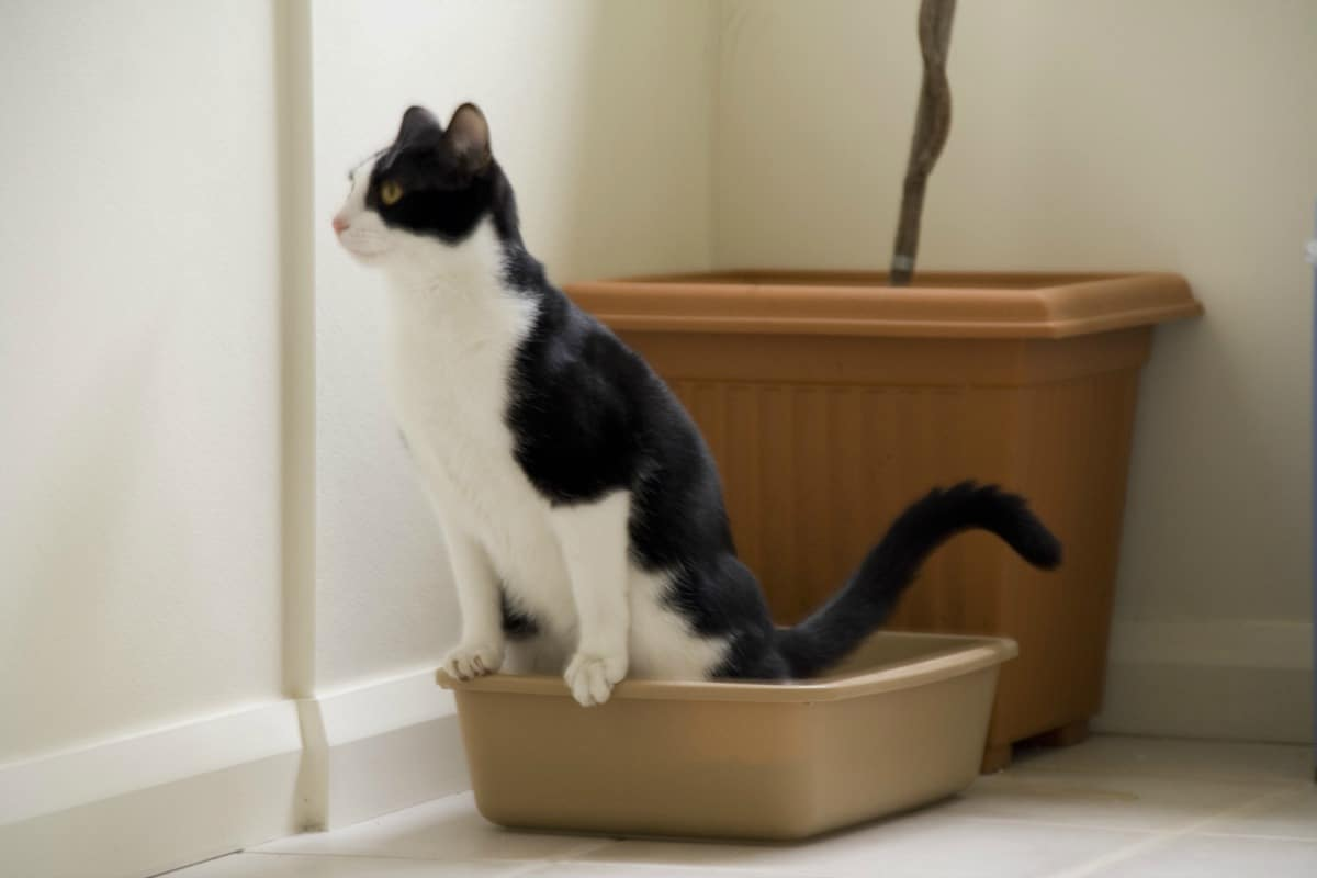 Tips for keeping your litter box fresh