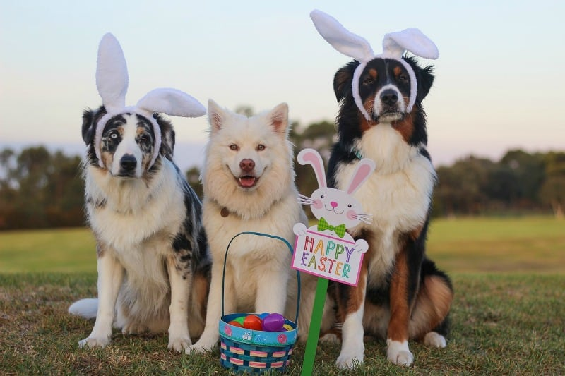8 Fun Spring or Easter Gifts for Dogs