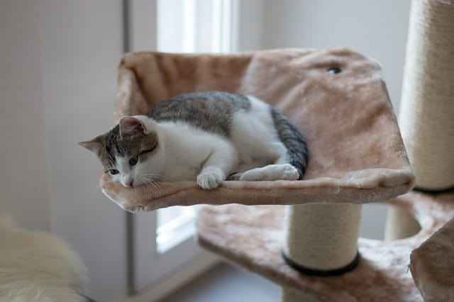 Caring for Carpeted Cat Trees for Large & Heavy Cats