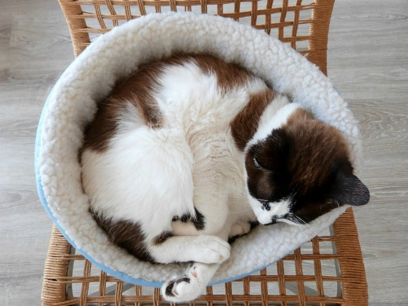 Cat DIYs Your Cat Will Thank You For DIY cat bed